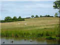 SP5367 : Ridge and furrow pastures near Braunston, Northamptonshire by Roger  Kidd
