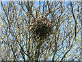 NR2357 : Nest in a Rowan tree by M J Richardson