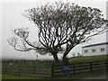 NR2263 : Sycamore at Kilchoman by M J Richardson