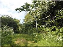 TL2732 : Path by Warren Lane, Clothall by David Howard