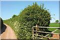 SX7943 : Near Coleridge Farm by Derek Harper