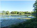 SE2641 : Paul's Pond, Breary Marsh SSSI by Stephen Craven