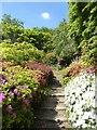 SU9941 : Winkworth Arboretum - Azalea Steps - top by Rob Farrow