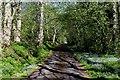 NH5560 : Access Lane beside the Allt na Laitch by Chris Heaton
