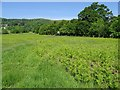 SO7744 : Growing bracken, Malvern Common by Philip Halling