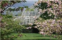 TQ1876 : The Palm House, Kew Gardens by Peter Jeffery