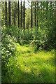 SX4767 : Path, Great North Wood by Derek Harper