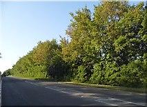 TL3155 : Old North Road, Longstowe by David Howard