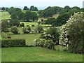 SJ5255 : Fields and hedgerows in springtime : Week 22