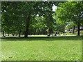 NT2573 : Grass in Princes Street Gardens, Edinburgh by Graham Robson