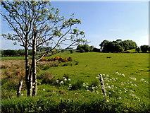 H5575 : Tree, Altdrumman by Kenneth  Allen