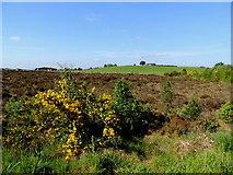 H5575 : Whins and bogland, Altdrumman by Kenneth  Allen