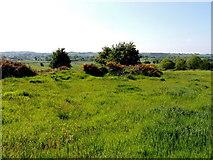H5575 : Rath, Streefe Glebe by Kenneth  Allen
