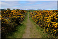 NH7487 : The Way across Cuthill Links by Chris Heaton
