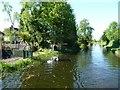 SK0002 : Swans on the Wyrley & Essington Canal by Christine Johnstone
