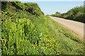 SX7736 : Lane near East Prawle by Derek Harper