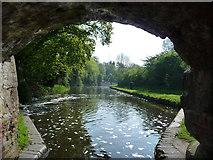 SO8690 : Staffs & Worcs Canal, below Hinksford Lock by Christine Johnstone