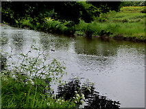 H4772 : Camowen River, Cranny / Campsie by Kenneth  Allen