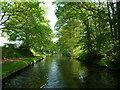 SO8686 : Staffs & Worcs canal, alongside Gothersley Rough by Christine Johnstone