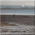 NH7755 : Low tide at Ardersier by valenta