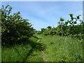 SU0173 : Footpath to High Penn Farm by Vieve Forward