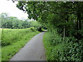 TQ5814 : Cuckoo Trail at Junction with Footpath by PAUL FARMER