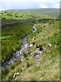 NY9805 : Stream flowing off Gale Head Moor by Andy Waddington
