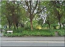 SO9496 : Small park on Wellington Road, Bilston by David Howard