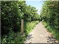 TQ5810 : Milepost 8, The Cuckoo Trail by PAUL FARMER