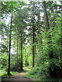 SP8808 : The All Ability Trail at Wendover Woods by Chris Reynolds