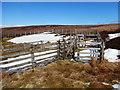 NY9201 : Sheep pen on Lownathwaite by Andy Waddington