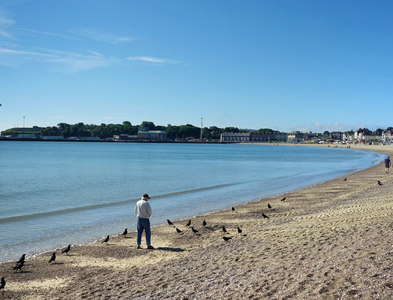 SY6879 : Feeding the Crows, Weymouth Beach by Des Blenkinsopp