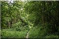 TQ0548 : Path on Albury Downs by Ian Capper