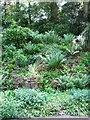 TG2208 : The Plantation Garden - a variety of ferns by Evelyn Simak