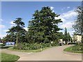 SJ8640 : Trees by the car park at Trentham Gardens by Jonathan Hutchins