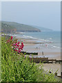 SN1607 : Wild flowers above the beach at Amroth : Week 24