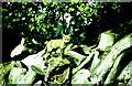ST8283 : Fox Cub on Woodpile, nr Luckington, Wiltshire 1986 by Ray Bird