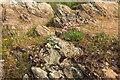 SX7236 : Wild flowers above Starehole Bay by Derek Harper