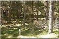 NN5959 : Forest, Aulich Hill by Richard Webb