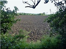 SP1655 : Field by Alcester Road, Drayton by David Howard