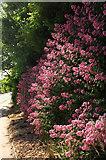 SX9066 : Red valerian, Browns Bridge Road by Derek Harper