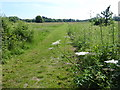 TQ0977 : Path in Cranford Countryside Park by Marathon