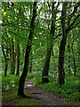 SJ8807 : Woodland track near Brewood in Staffordshire by Roger  Kidd