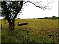 H5672 : Roller in a field, Mullaghslin Glebe by Kenneth  Allen