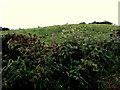 H5572 : A low hill, Bracky by Kenneth  Allen