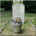 TG5208 : Cemetery squirrel by Adrian S Pye