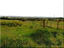 H5672 : Grassland, Mullaghslin Glebe by Kenneth  Allen