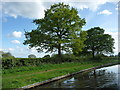 SP0375 : Trees along the Worcester & Birmingham canal towpath by Christine Johnstone