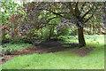 SP1096 : Damp scrub by Plants Brook by Bill Boaden