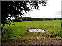 H5559 : An open field, Garvaghy by Kenneth  Allen